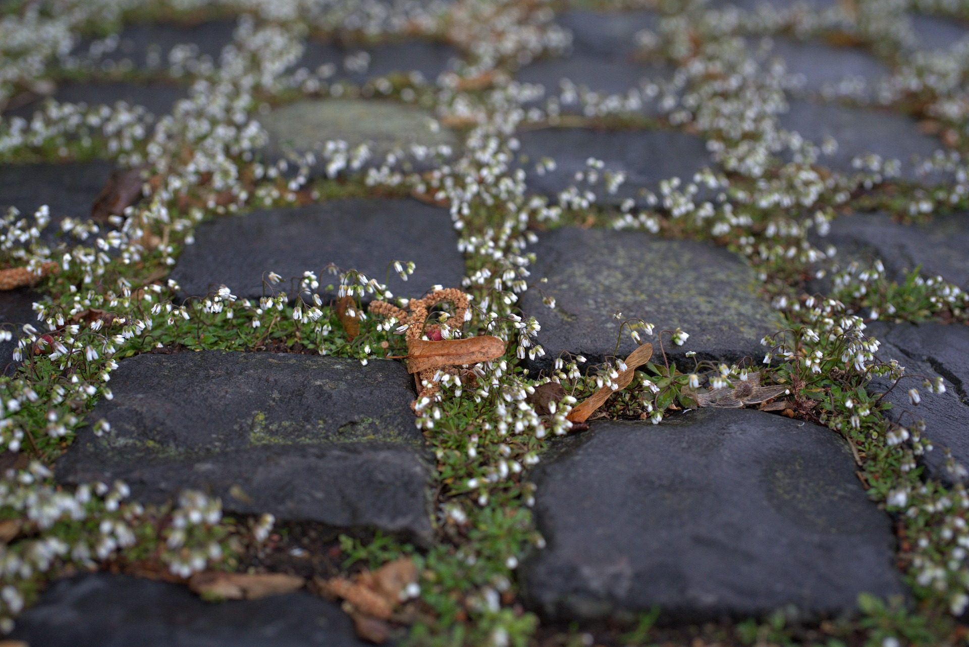 Tips On Laying Paving Slabs In Your Garden